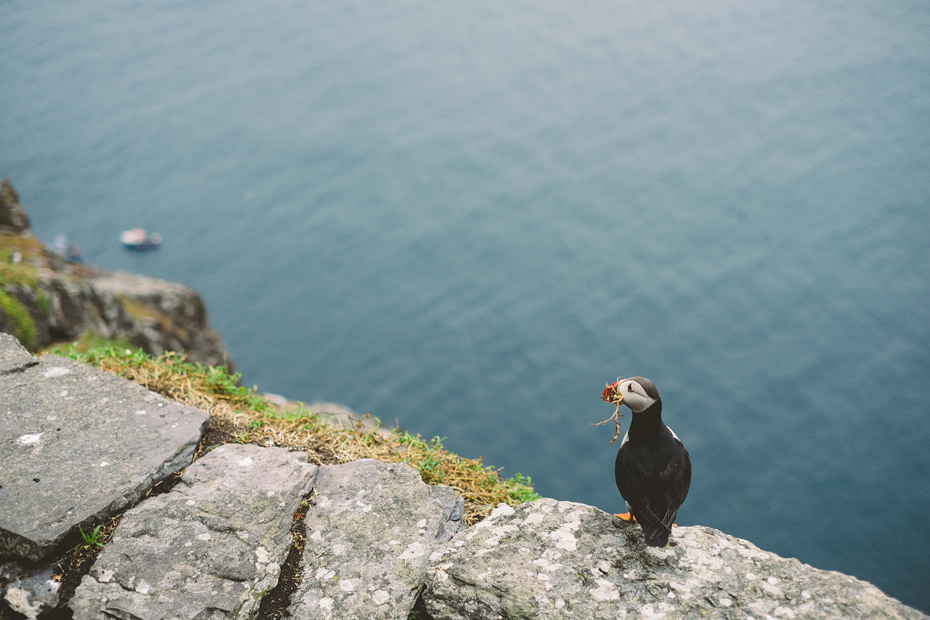 Skellig Michael Puffin