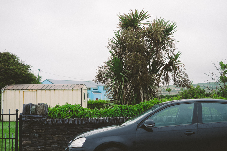 Palm Tree in Ireland